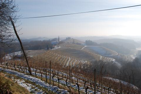 vineyards slovenia stajerska