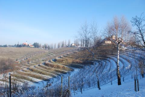 Llutomer-Ormoz vineyards slovenia